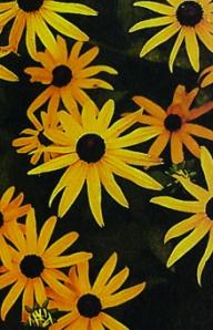 Flower Power 02